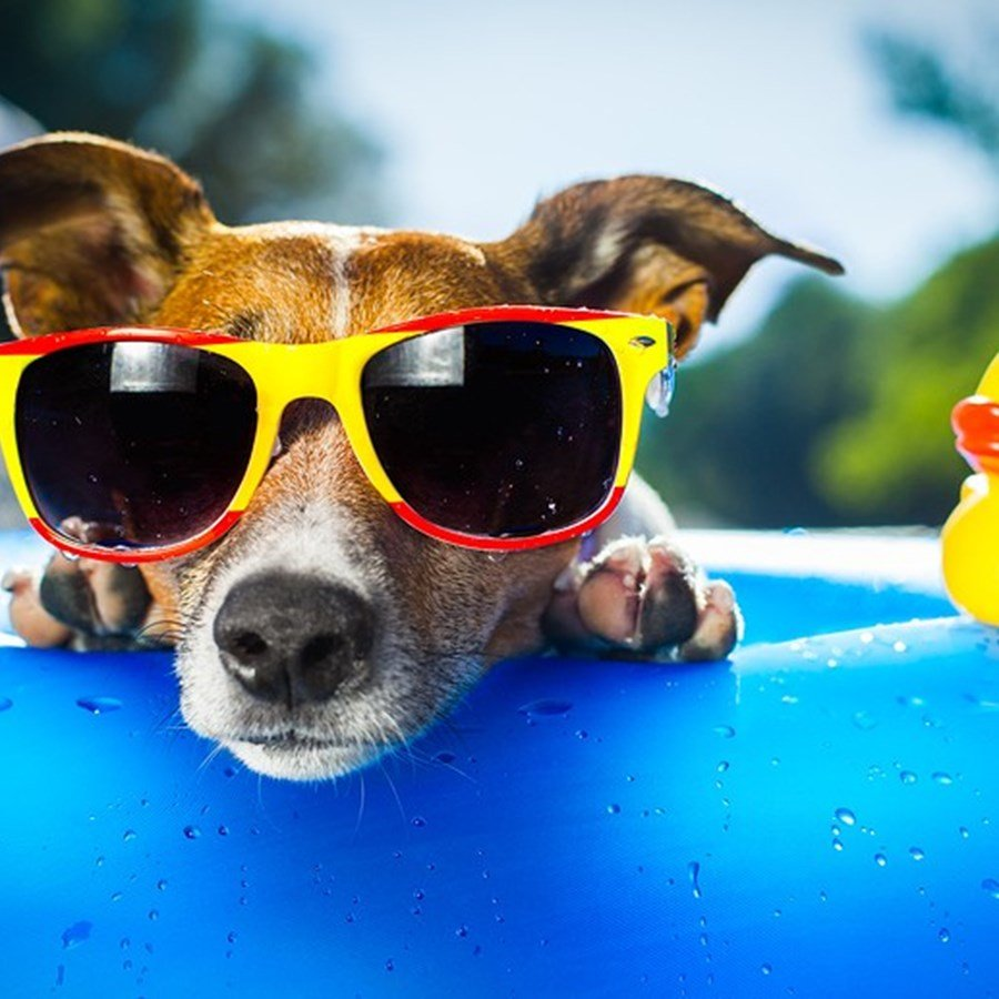 Looking for a Dogoliday? Dog friendly Geelong & The Bellarine