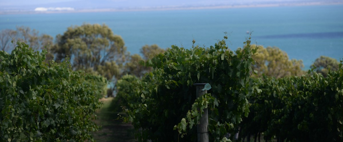 The Melbourne Food and Wine Festival - in Geelong and The Bellarine