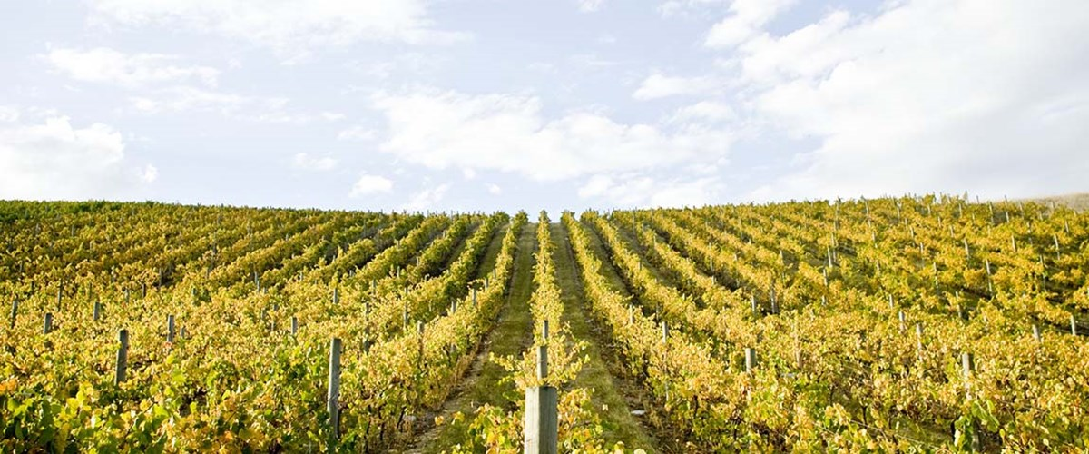 Cool Season, Cool Climate = Cool Wines