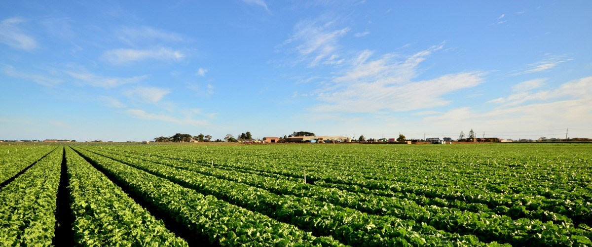 Land, sea and sky – explore all the elements in wonderful Werribee.