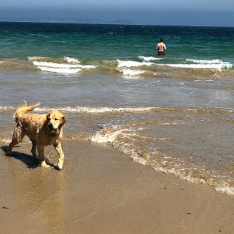At the Beach with my Golden Retriever