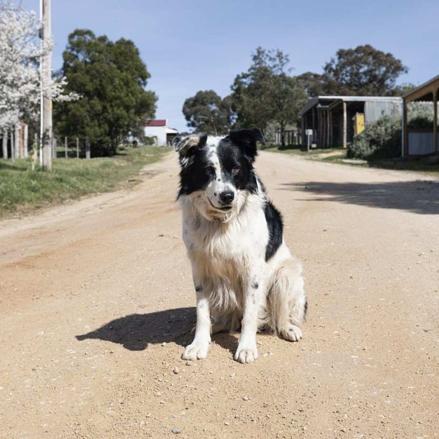The best dog-friendly scenic walks in Geelong and The Bellarine