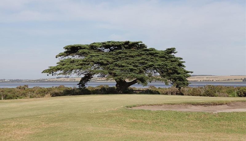 Bunker and tree with Swan Bay in the background