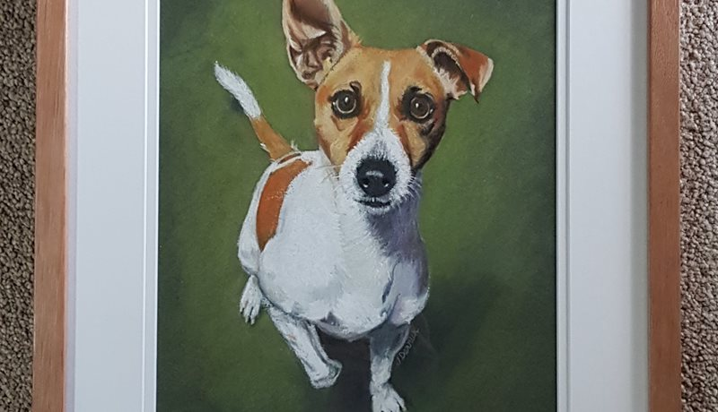 Pastel Drawing of Jack Russell